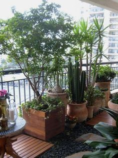 Árvores: Espécies que podem ser plantadas em vaso