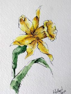 Daffodil flower original art watercolor painting pen and ink