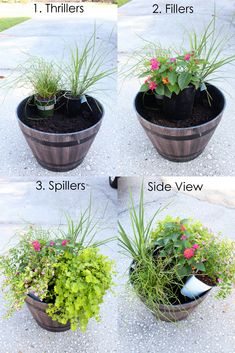 Plant Summer Flower Pots that will Thrive – Within the Grove Pflanzen Sie Sommerblumentöpfe, die gedeihen – im Hain The post Pflanzen Sie Patio Plants, Outdoor Plants, Outdoor Gardens, Front Porch Plants, Plants Indoor, Front Porch Flowers, Front Yard Planters, Tall Outdoor Planters, Front Porch Garden