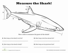 Measure Length: Shark!