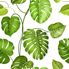 Topical palm leaves over white, seamless pattern. Vector illustration.