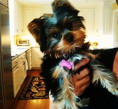 my wittle baby ChloeBelle @Debra Colpo