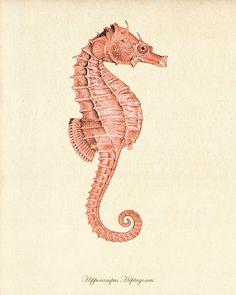 Sticker hippocampe impression ocean Beach House par AntiqueWallArt
