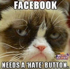 I hate the Grumpy Cat meme, but I gave an exception here, because I agree with her!