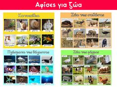 Animal posters (in Greek) Animal Posters, Teacher Pay Teachers, Greek, Photo Wall, Education, Cards, Pictures, Animals, Photos