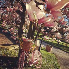 14.4 Dinanzi a noi correva primavera palpitante e affaccendata come una maestra di campagna. (Annie Vivanti) . . . . . #iphonephoto #iphonephotography #primavera #spring #springtime #printemps #frühling #wiosna #fiori #flowers #mygarden #flowerstagram #flowersofinstagram #floweroftheday #inmygarden #mygardentoday #gardensofinstagram #garden_styles #nature #naturelovers #naturephotography #natureza #natural #naturelover #natura #naturally #bicycle #bike #bicicletta