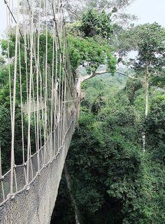 Canopy Walk - Accra, Ghana (my father's homeland)