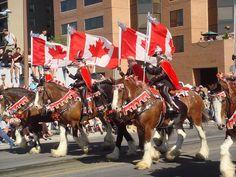 Calgary Stampede. Image by Danteling via Flickr.