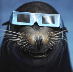 A sea lion wears a solar viewer during an annular solar eclipse at an aquarium in Tokyo, May 21, 2012. (Yomiuri Shimbun/Reuters)