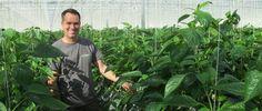 Устойчивое управление климатом для садоводства, коммунального хозяйства и промышленности - Прива