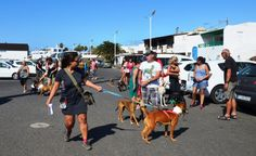 Lanzarote news | Pet neutering launched in Playa Blanca