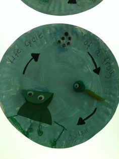 Life cycle of a frog. Water Cycle Craft, Life Cycle Craft, Kindergarten Themes, Kindergarten Science, Preschool, Frog Activities, First Grade Activities, Lifecycle Of A Frog, Frog Theme