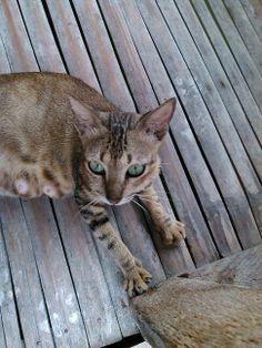 Meow 5