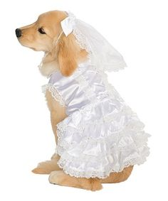 Rubies Blushing Bride Pet Costume | Best Price and Reviews | Zulily