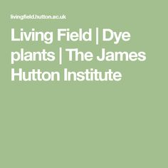 Living Field | Dye plants | The James Hutton Institute