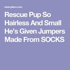 Rescue Pup So Hairless And Small He's Given Jumpers Made From SOCKS