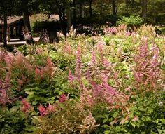 The Shady Nook - Designing a Garden for Partial Shade: Season Long Interest