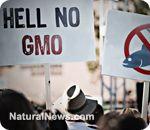 Renewed boycott announced against GMO pushing mega-corporations!   • Pepsi -- SoBe, Tazo, IZZE Sparkling Juice, Naked Juice, Naked Juice Coconut Water, Mother's Cereals, Nut Harvest Nuts, Sabra Hummus, Stacy's Pita and Bagel Chips, Aquafina    • Nestle -- Gerber Organics,  - #LabelGMOs
