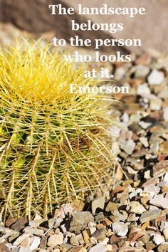 """The landscape belongs to the person who looks at it.""  -- Ralph Waldo Emerson –  Cactus in Tucson garden by Florence McGinn -- Joy and love fuel life and creativity.  Explore 40 quotations for writing inspiration at http://www.examiner.com/article/forty-quotations-for-writing-inspiration"