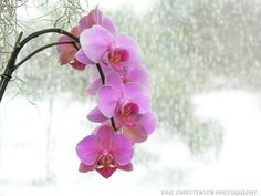 Google Image Result for http://upload.wikimedia.org/wikipedia/commons/2/21/Pink_orchid.JPG