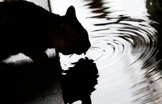 A cat drinks from a walkway in a flooded neighborhood in central Bangkok, on October 23, 2011. (Reuters/Damir Sagolj)
