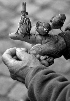 Little birds on a man's hand