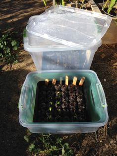 We started some of our seeds inside and are moving them into the new beds the old plants were in before.