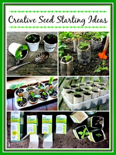 10 Creative Indoor Seed Starting Ideas - Some of these ideas are really creative!