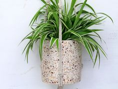 Terrazzo hanging plant pots will add style and beautiful plants in your home at the same time #hangingplant #terrazzo #terrazzohome #terrazzostyle