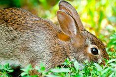 bunny prowl