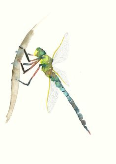 Dragonfly Original Watercolor Painting by dearcatherina on Etsy