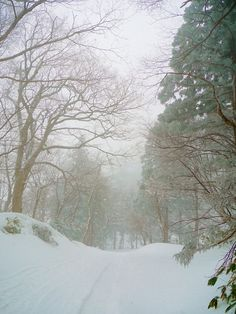 Snowy Path  by maco-nonch★R