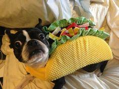 Un chistoso perro disfrazado de taco