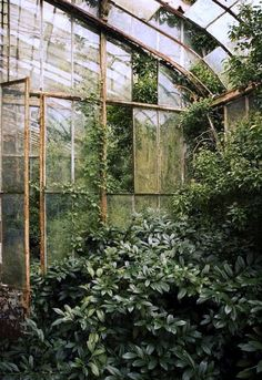 - #conservatorygreenhouse