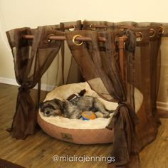 Here's how to make a DIY dog canopy out of PVC pipes! It's cheap, easy and absolutely adorable. Song: GLAMPING x Evan Schaeffer Diy Dog Kennel, Diy Dog Bed, Dog Kennels, Dog Bedroom, Puppy Room, Dog Spaces, Diy Dog Collar, Cool Dog Houses, Dog Furniture