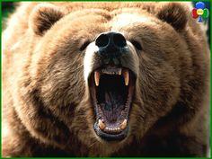 """Sfida uomo-orso a Cavalese – Aperta """"La Caccia all'Orso"""""""