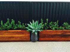 Our Wee House   – by Kaza & The Pantz Plants - Agarve & Gardenia Augusta Floridas in timber planter boxes!