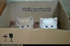 It just isn't a box without a kitteh inside it.