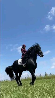 Beautiful Arabian Horses, Most Beautiful Horses, Animals Beautiful, Funny Horse Videos, Funny Animal Videos, Dressage Horses, Friesian Horse, Cute Horses, Horse Love