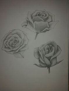 Illustration of roses