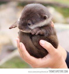 Otter ball。かわうその赤ちゃん♪