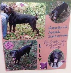 07/14/14 sl ~~Lilly  Hound • Adult • Female • Medium  Scottsboro Animal Shelter Scottsboro, AL