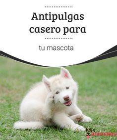 Antipulgas caseropara tu mascota  No sufras más por los parásitos en la piel de tu mascota te enseñamos como hacer un antipulgas casero. #