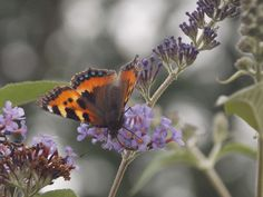 Butterfly / flowers / shallow depth of field