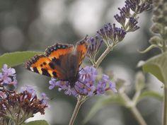 Butterfly / flowers / shallow depth of field