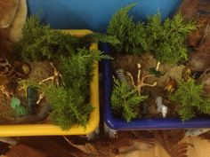 wild animals sensory table