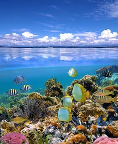 Under the waters in Fiji