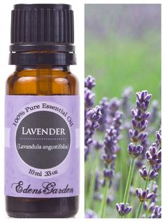 LAVENDER ESSENTIAL OIL (Lavandula angustifolia) Rich lavender-floral aroma like fresh lavender in which herbalists regard it as the most useful and versatile essential oil for therapeutic purposes. The aroma is said to have a calming effect on the body and it can be used to reduce anxiety, stress, and promote sleep.  Apply one drop to bee sting, bug bite, burn, or other skin irritation for relief. #lavender #lavenderessentialoil  #restfulsleep #insomniahelp