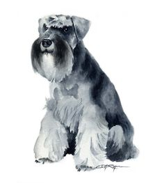 Schnauzer miniature impression d'Art par l'artiste DJ Rogers Miniature Schnauzer Puppies, Schnauzer Puppy, Schnauzers, Dog Hotel, Dog Paintings, Dog Portraits, Watercolor Paintings, Painting Art, Watercolor Paper