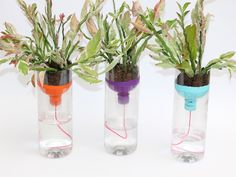 It's every busy and forgetful mom's dream: self watering planters that look great and do the work for you.
